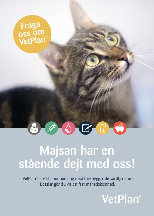 Cat poster with info