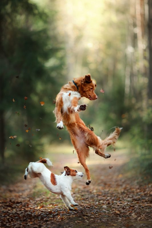 Dogs jumping and playing